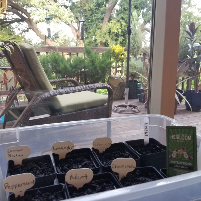 Seed Garden at window
