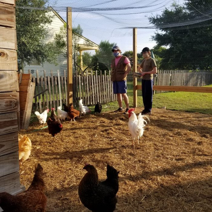 Pioneer Farms Chickens