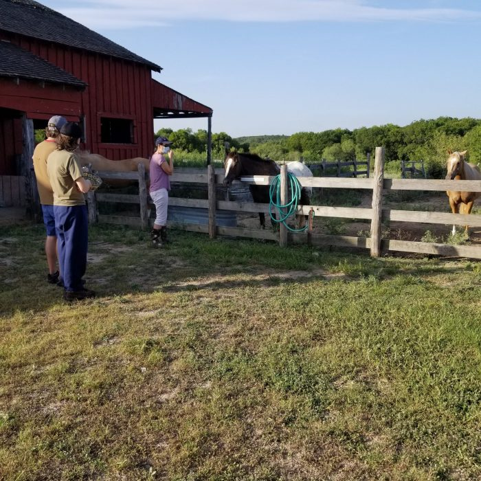 Pioneer Farms Horses