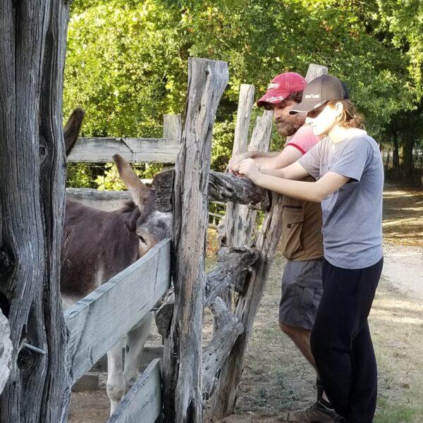 Pioneer Farms Donkeys